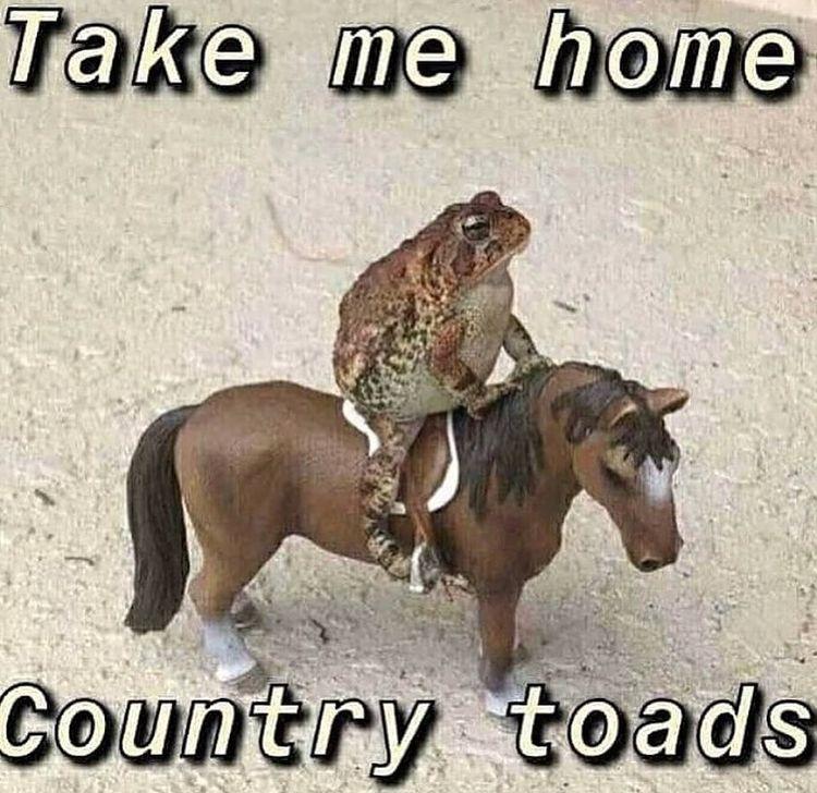 country roads take me home - meme