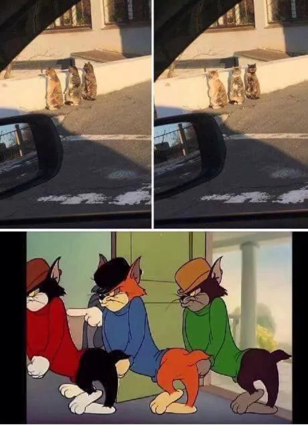Eles são reais *-* - meme