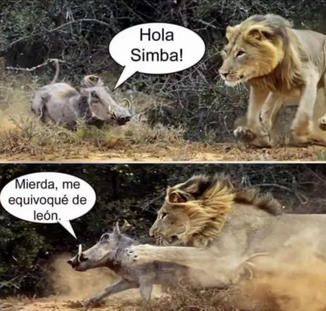 Simba - meme