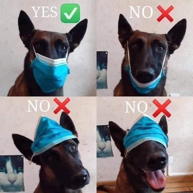 Follow the rules - meme