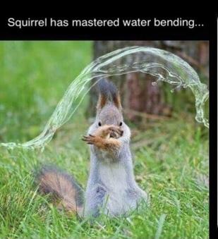 Squirrel, Sandy Cheeks, Flying Squirrel, California Squirrel - meme