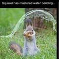 Squirrel, Sandy Cheeks, Flying Squirrel, California Squirrel