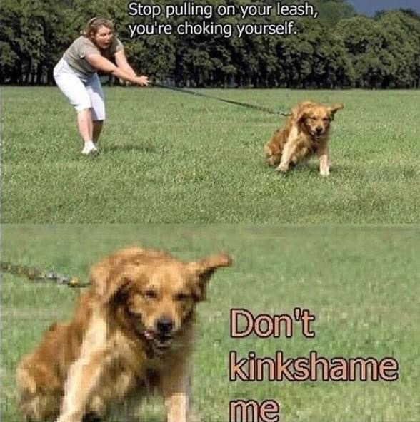 Don't kinkshame the doggo - meme