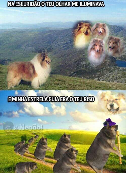 Cachorros #5 - meme