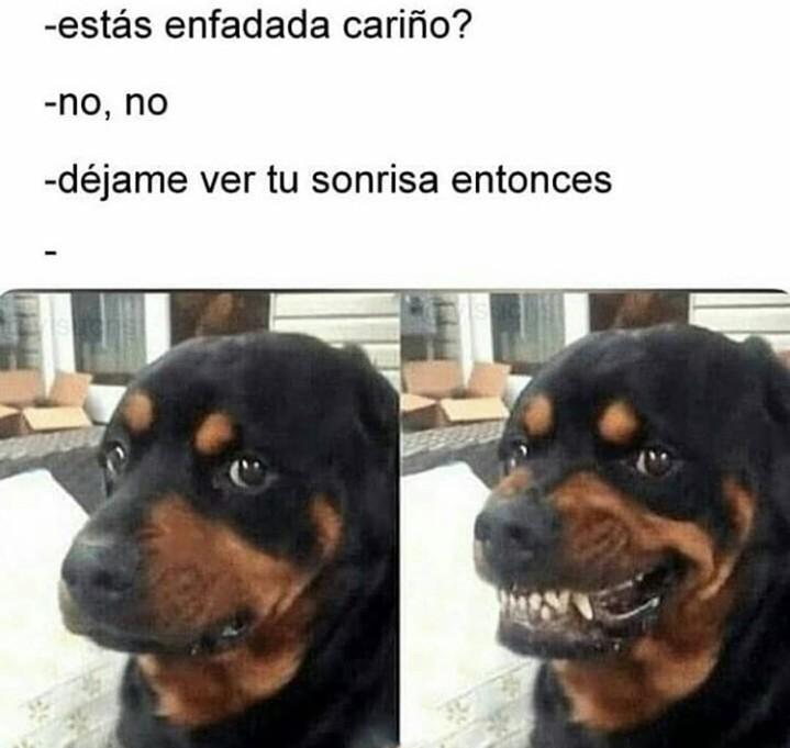 Bos terriero - meme