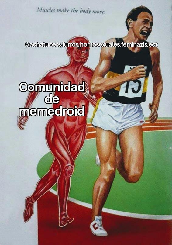 Memedroid en resumen