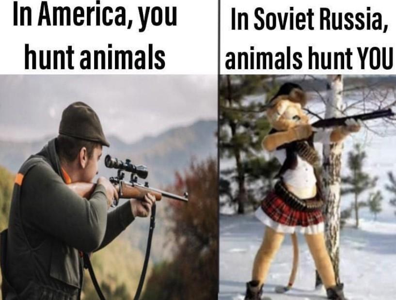 Goddamn furries - meme