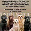 be like dogs