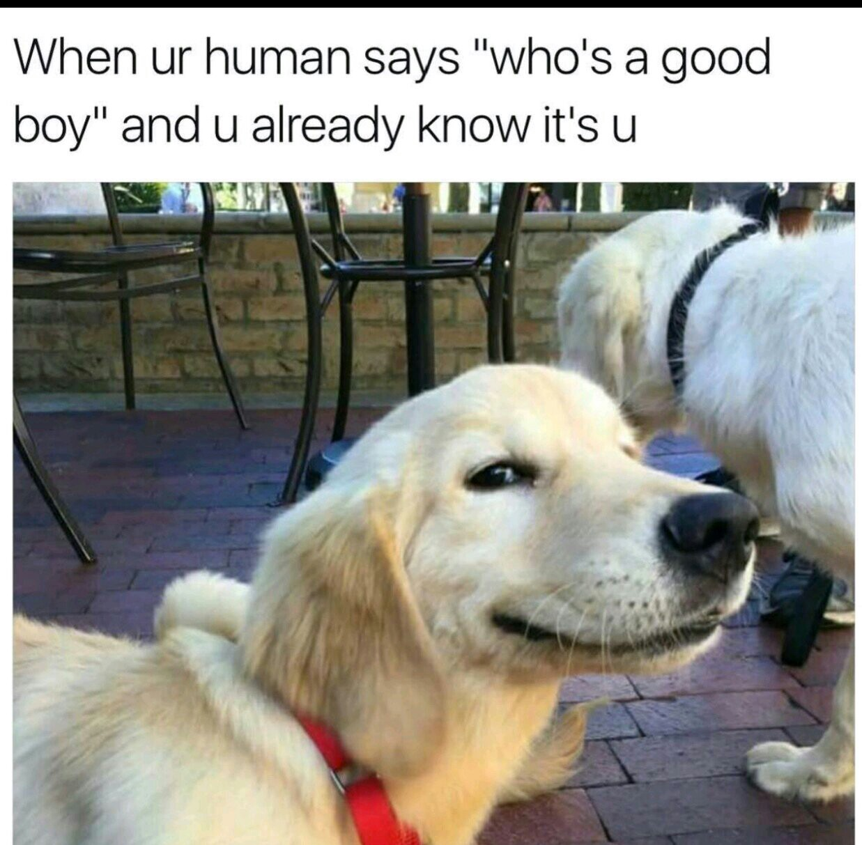 Happy Doggo - meme
