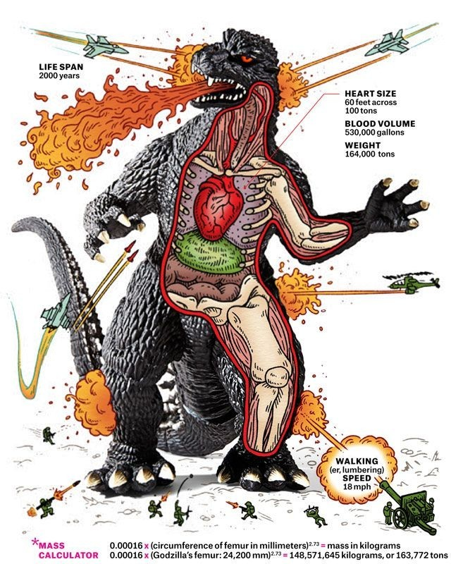 Godzilla anatomy - meme