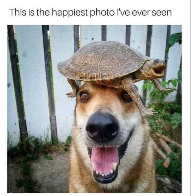 Happy - meme