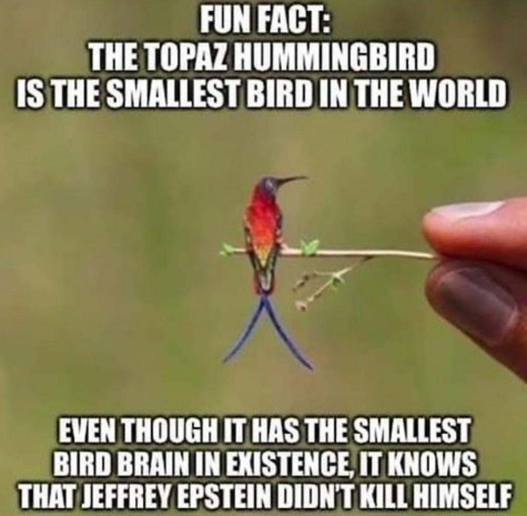 Woke Bird - meme