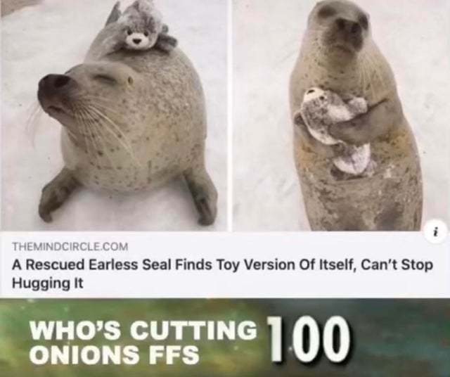A rescued earless seal find toy version of itself - meme