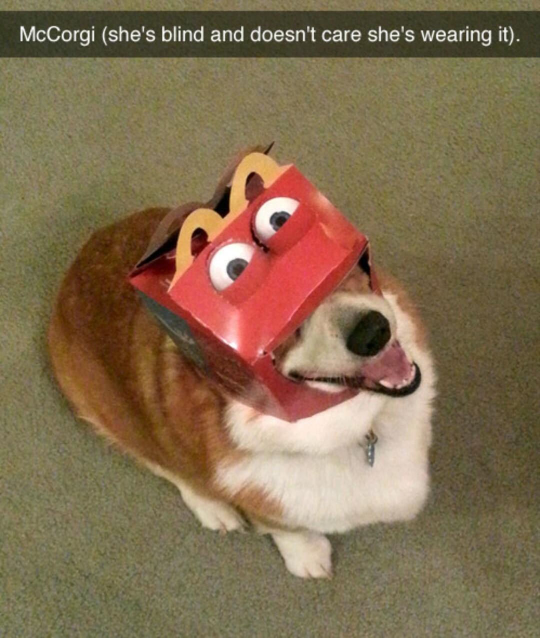 McDerp - meme