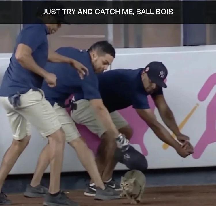 ball boys - meme