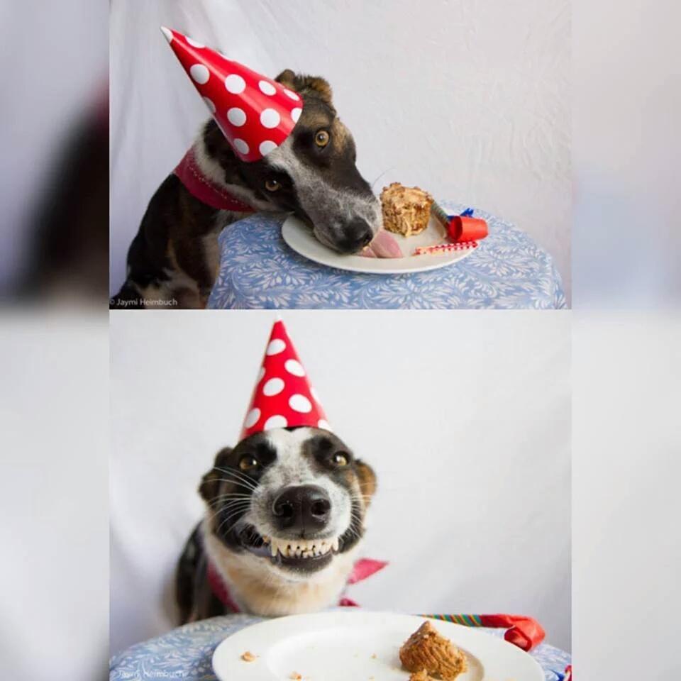 Открытки приглашения, открытки с днем рождения собака с тортом