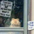 Don't let the cat out!