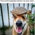 Happy Doggo