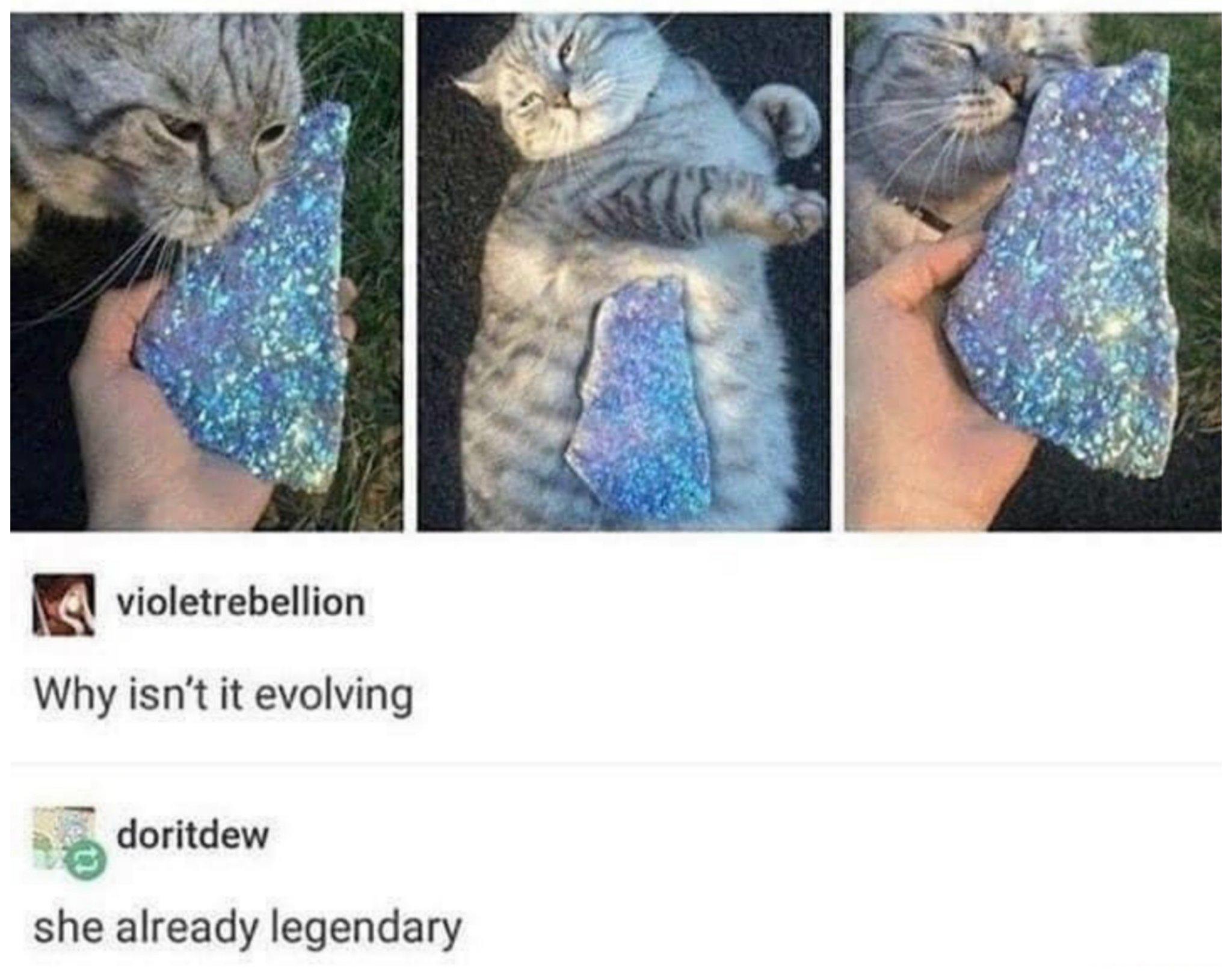 Legendary kitti - meme