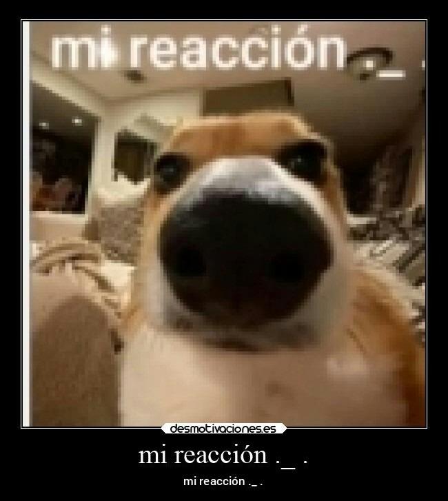 Mi reacción. - meme