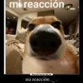Mi reacción.