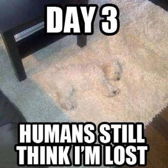 Hide and Seek level: bork - meme