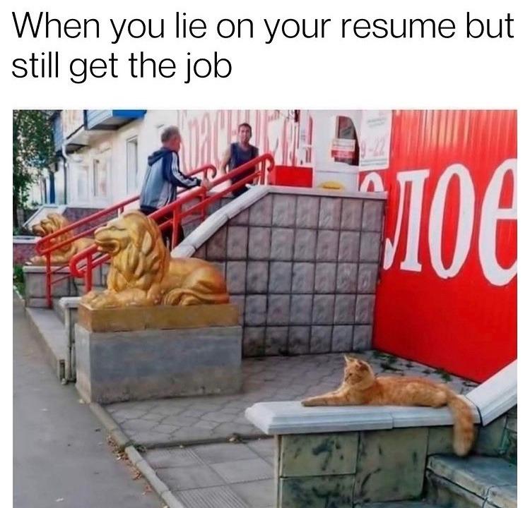 cat lion - meme
