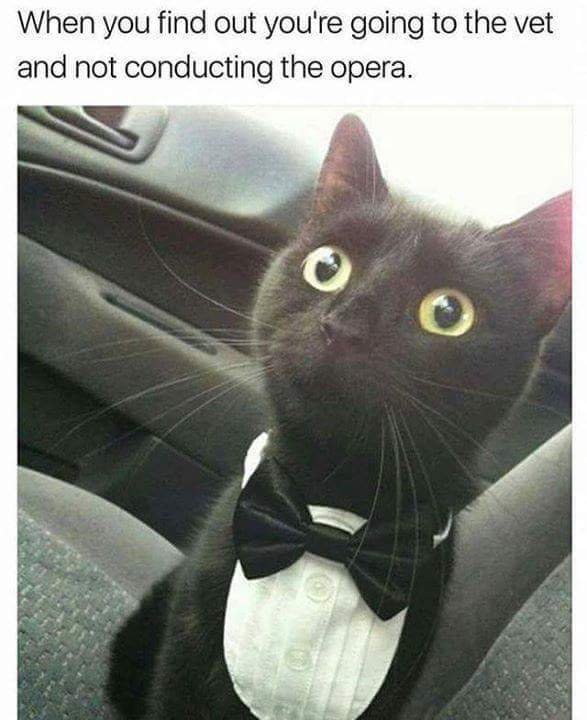 When you find out you are going to the vet and not conducting the opera - meme