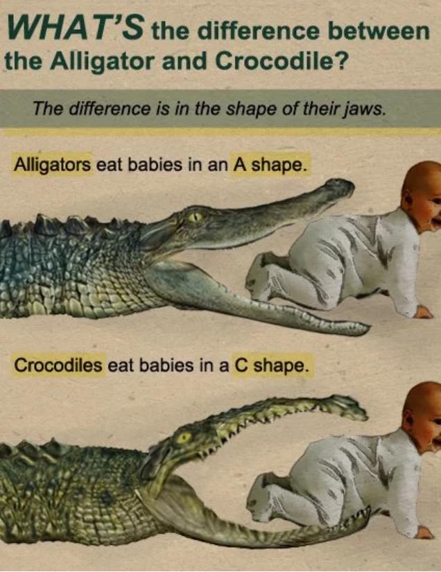 croc or alligator - meme