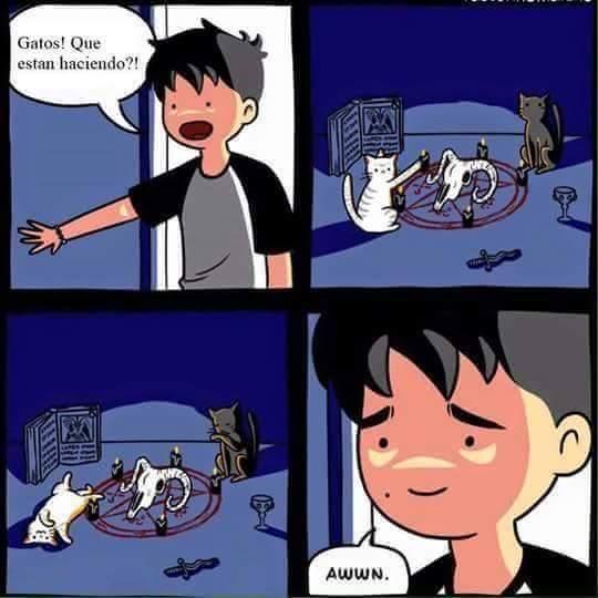 Gatitos :3 - meme