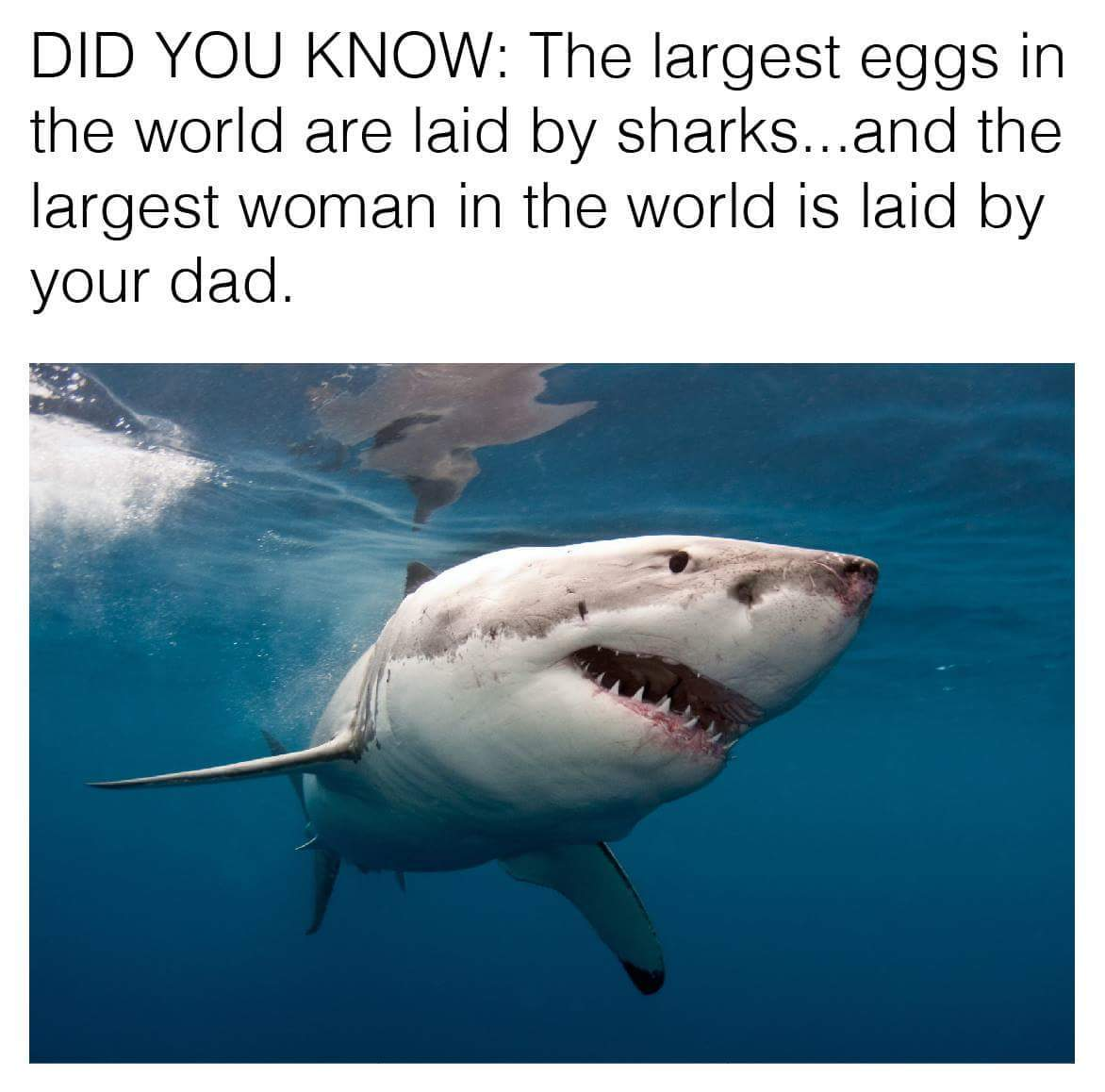 Great white - meme