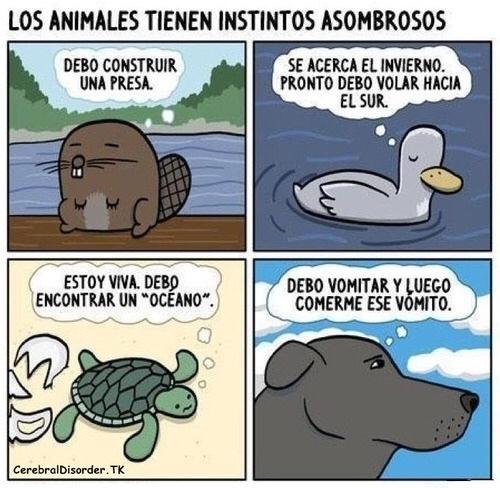 lo que callamos los animales - meme