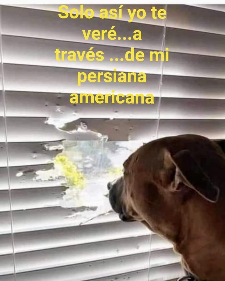 Por si no sabian, las persianas vienen con ventana ahora - meme