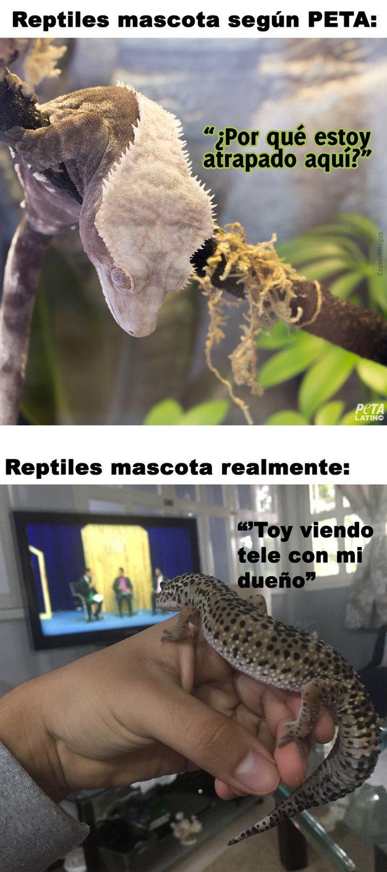 PETA mentirosa - meme