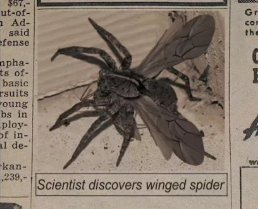 Araña voladora - meme