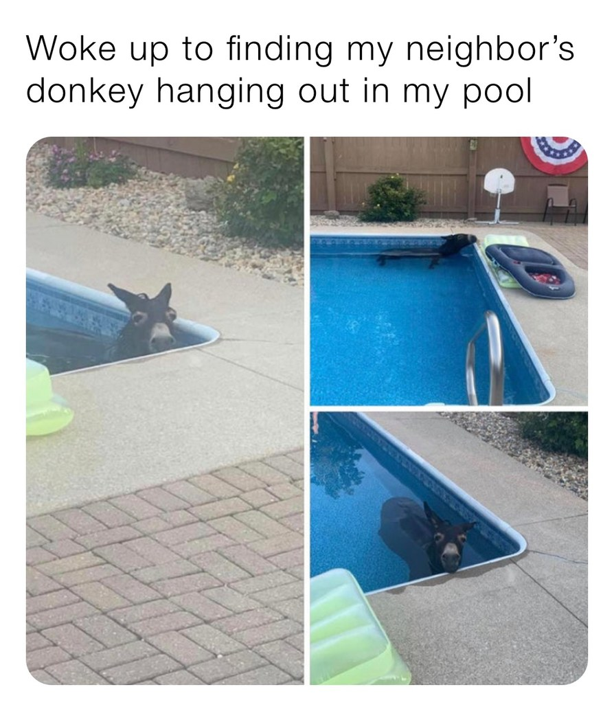 lonkey - meme