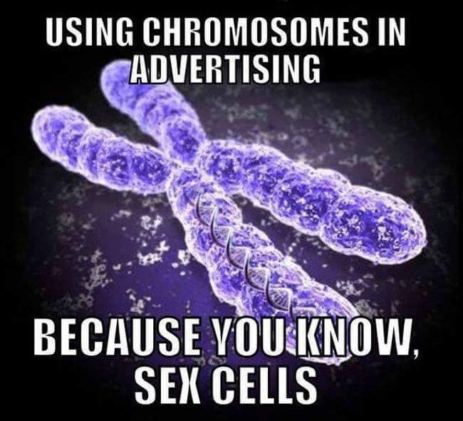 Sex Cells - meme