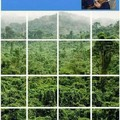 Select the trees that are speaking Vietnamese