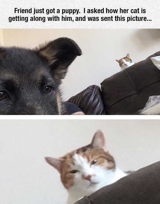 Catto doesn't like Doggo - meme