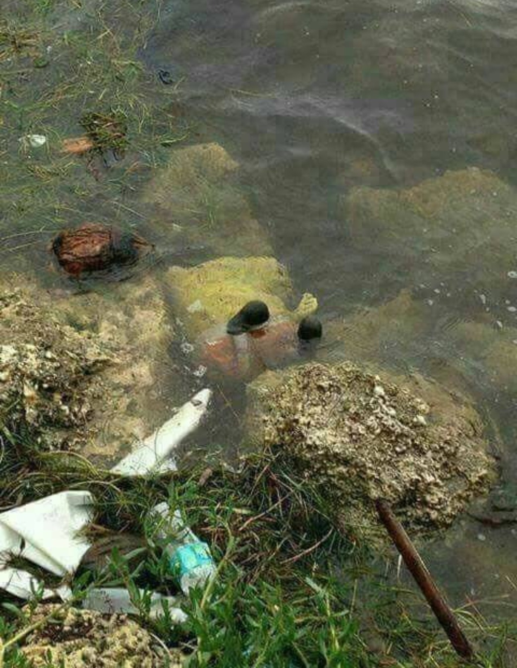 who died from pollution under the sea ??!! - meme