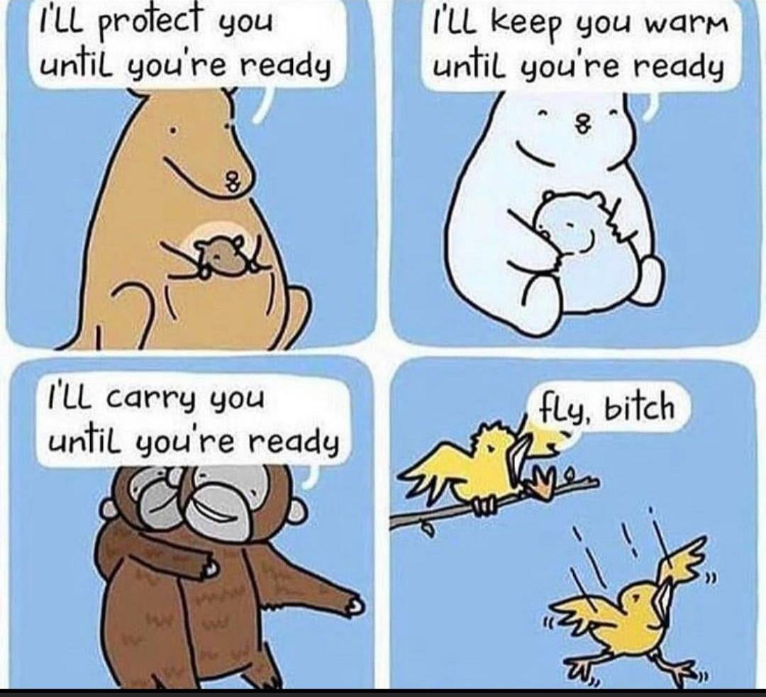 FLY BITCH - meme