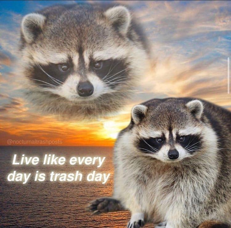 garbage day - meme