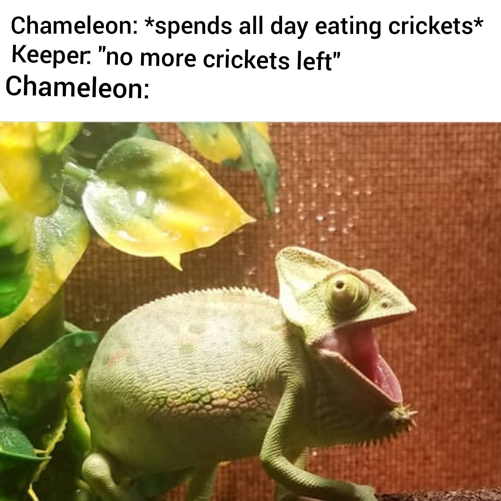 Chameleons are fukn awsome - meme