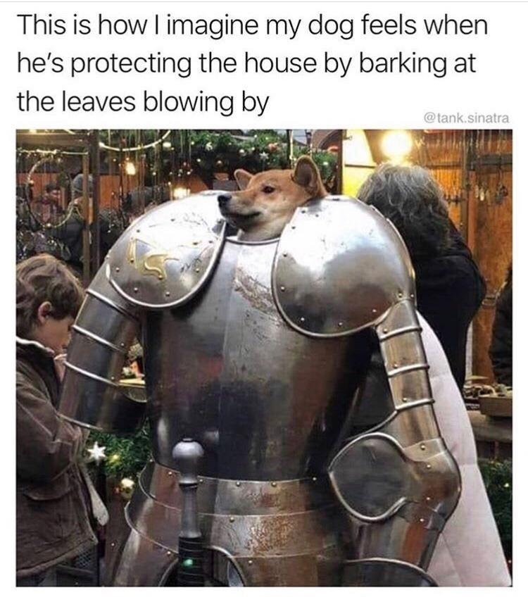 Le doge - meme
