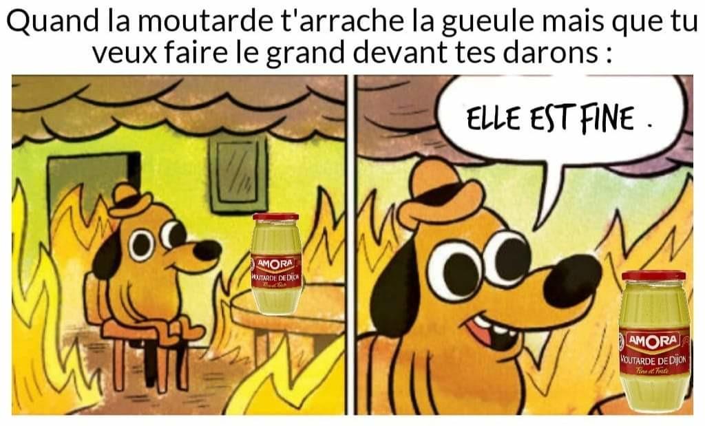 Excellent - meme