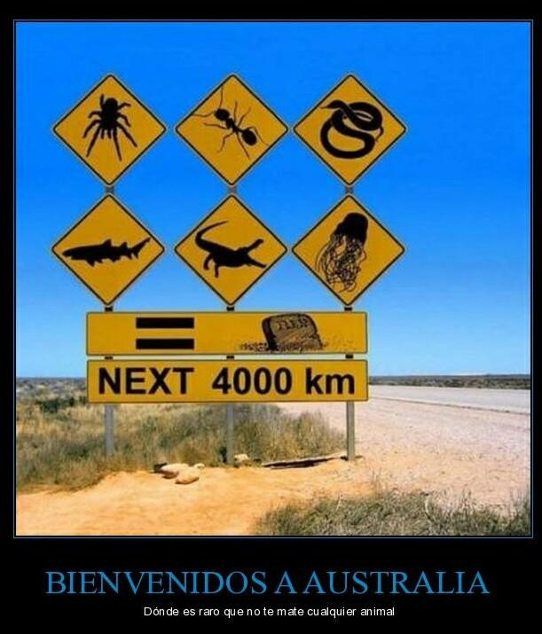Un día común en Australia. - meme