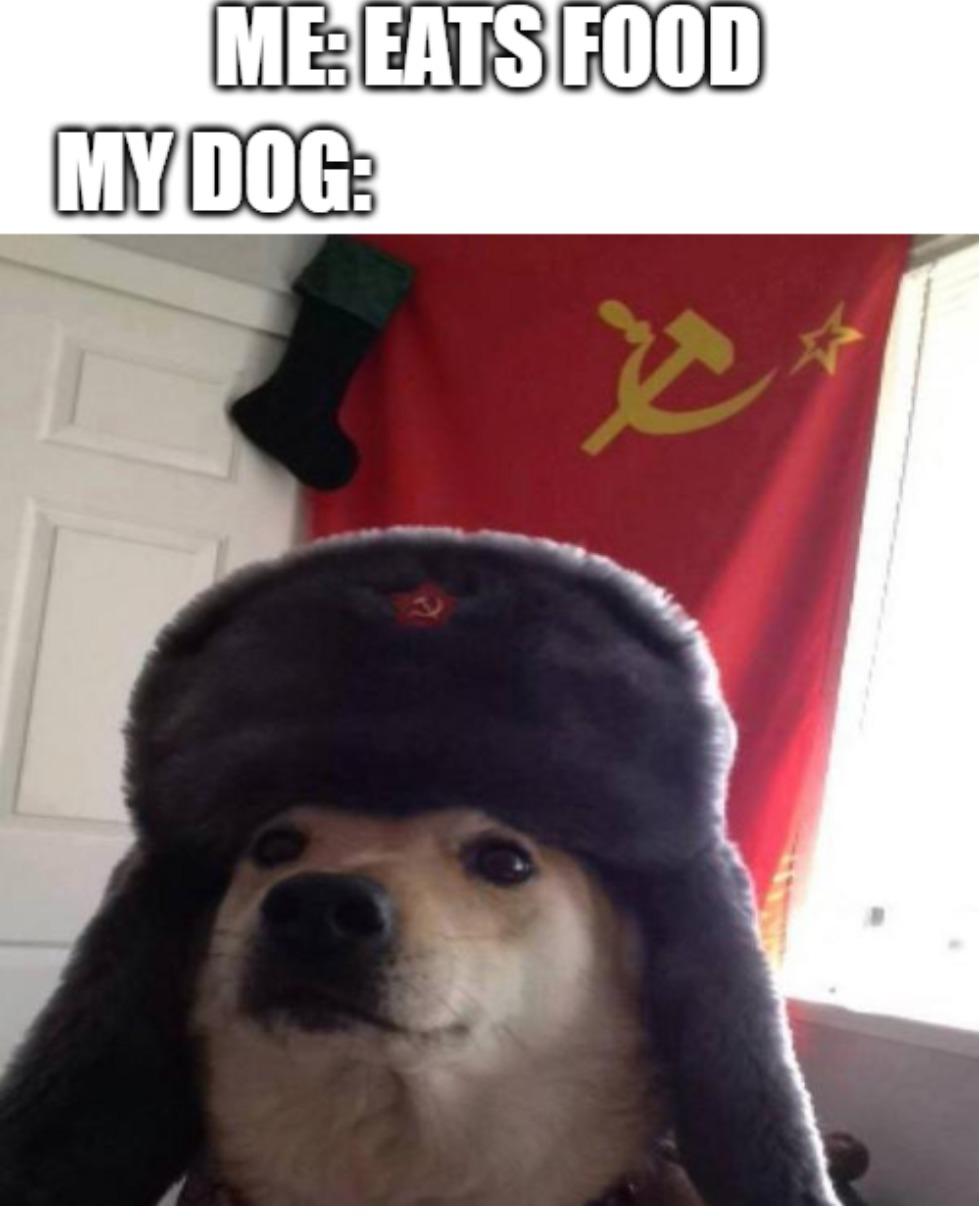 wait i dont have a dog - meme
