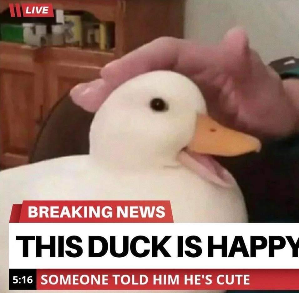 Pato feliz - meme