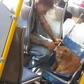 gato educado fodase