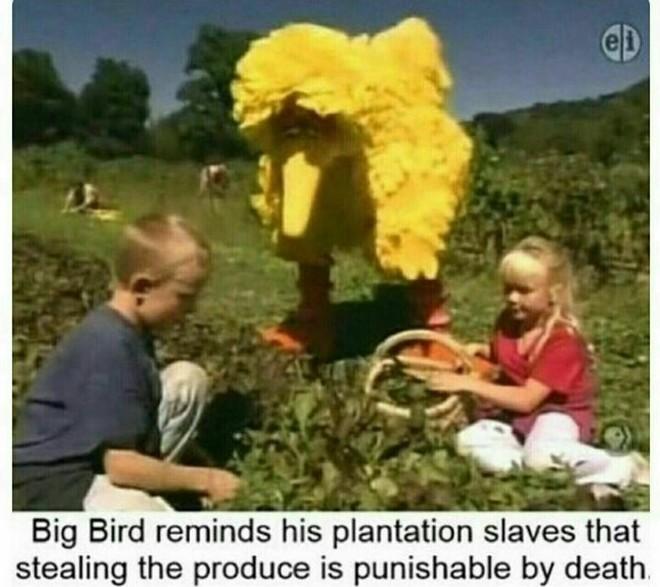 Big Bird sees everything. - meme